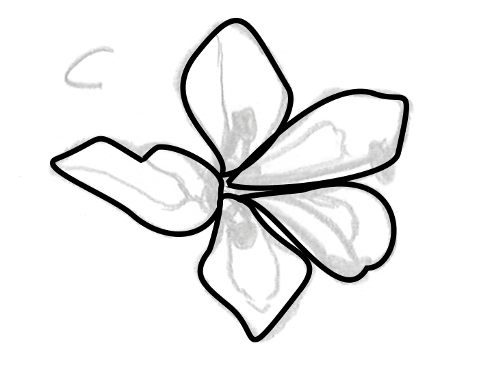 """A slightly transparent drawing of a flower with a """"C"""" labeled next to it, with black outlines of flower petals on top."""