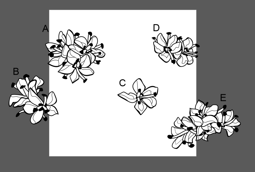 The same flower bunches as the first image now vector and in black and white, all labeled A-E.