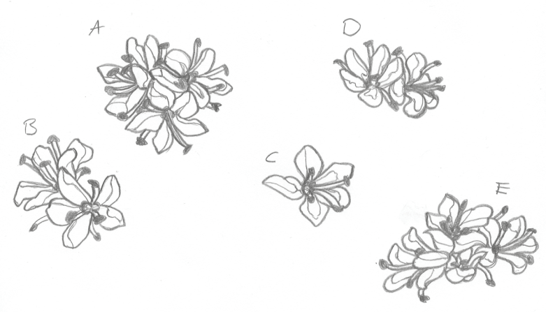 A drawing of five different bunches of flowers, labeled A-E.